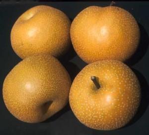 گلابی ژاپنی؛ Japanese Pear : nashi : 梨