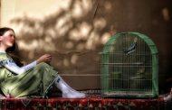 جایزه جشنواره ژاپنی برای سینماگر ایرانی