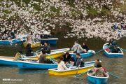 طراحان تور ژاپن به شهداد رفتند / اقدام ژاپنیها برای جذب گردشگر