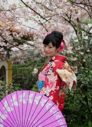 بهار در ژاپن ـ شکوفههای گیلاس ـ 1