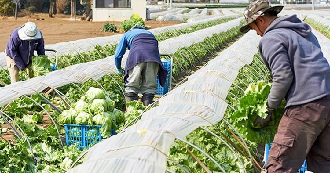 تغییر کشاورزی در ژاپن از حالت خانوادگی به سمت شرکتی شدن
