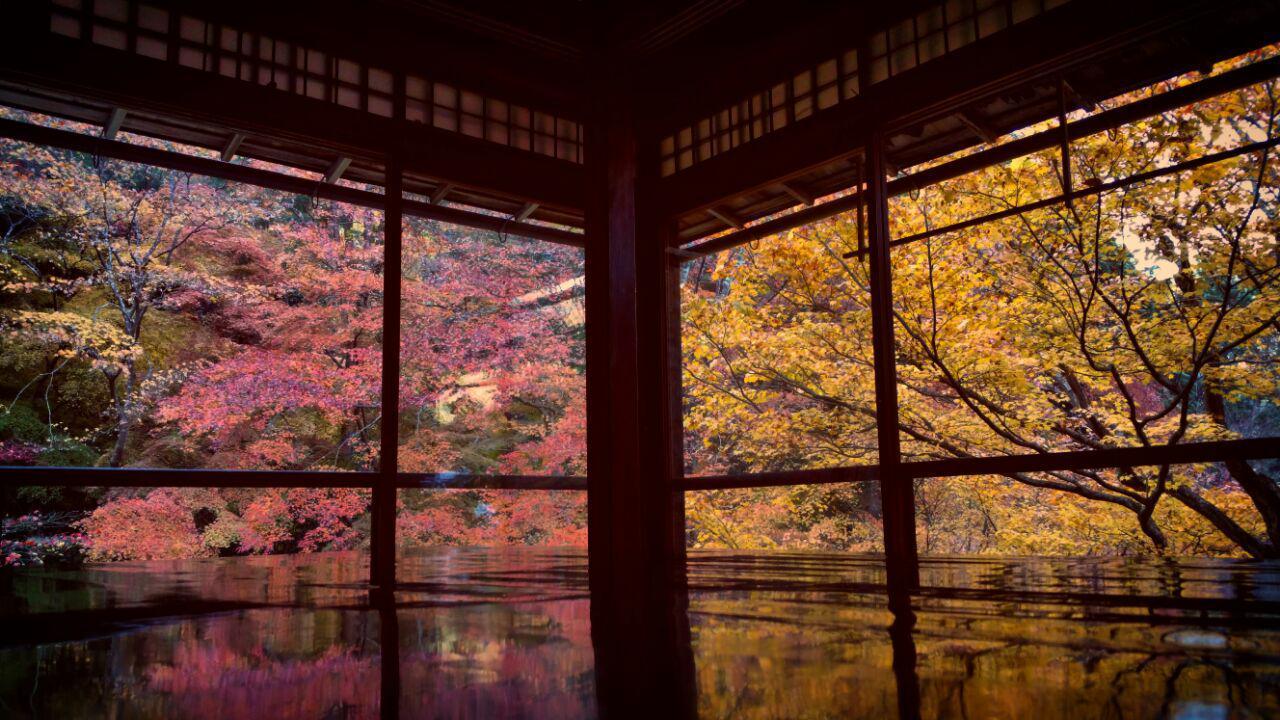 پاییز زیبا در معبد روریکویین (瑠璃光院)
