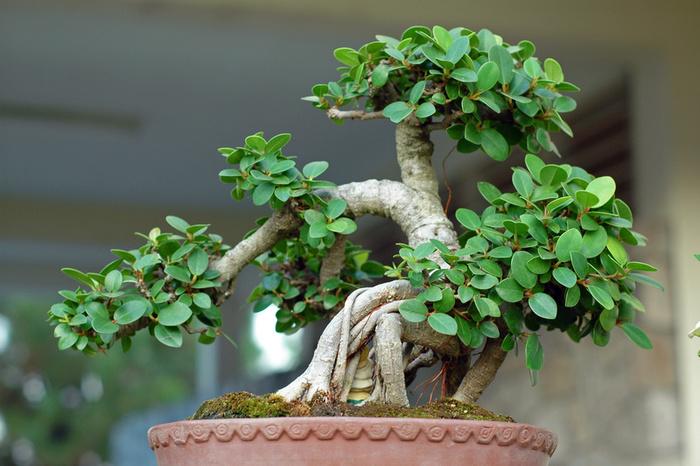 [تصویر:  bonsai-22.jpg]